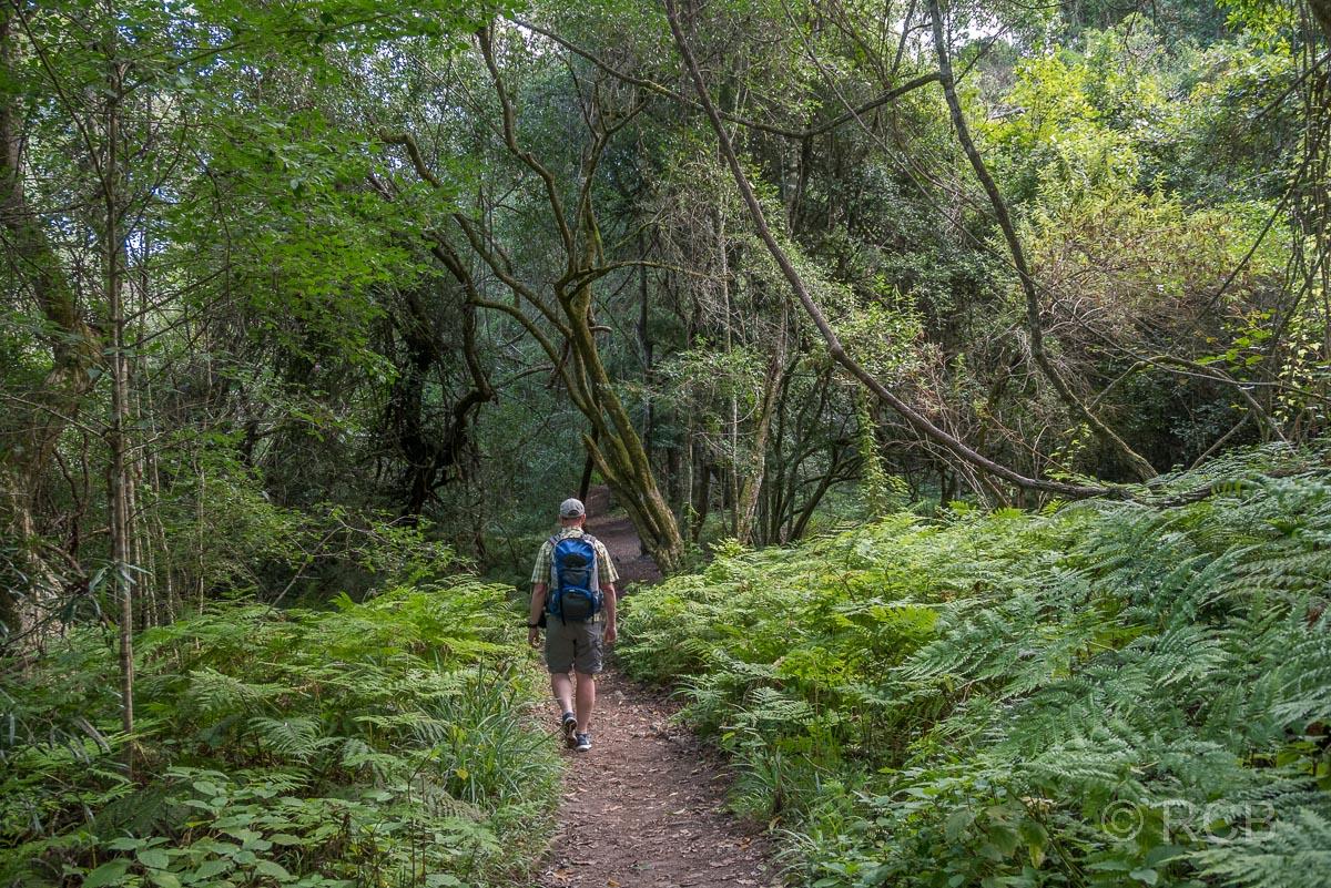Mann wandert auf dem Half Collared King Fisher Trail bei Wilderness