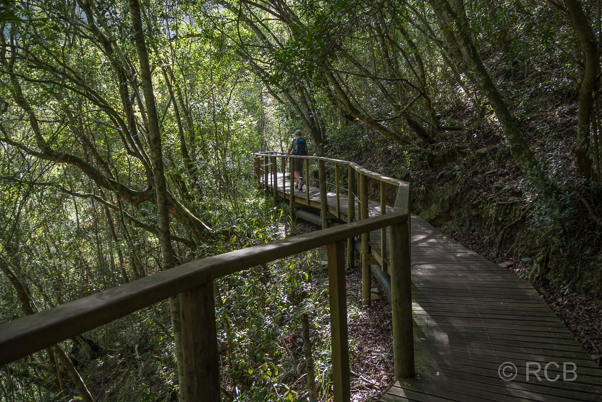 Bohlenweg auf dem Half Collared King Fisher Trail bei Wilderness