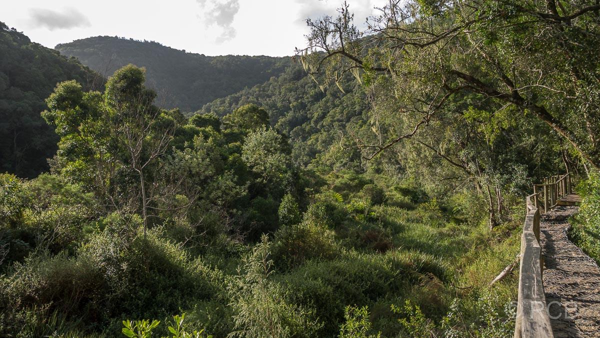 Im grünen Tal des Touws River auf dem Half Collared King Fisher Trail bei Wilderness