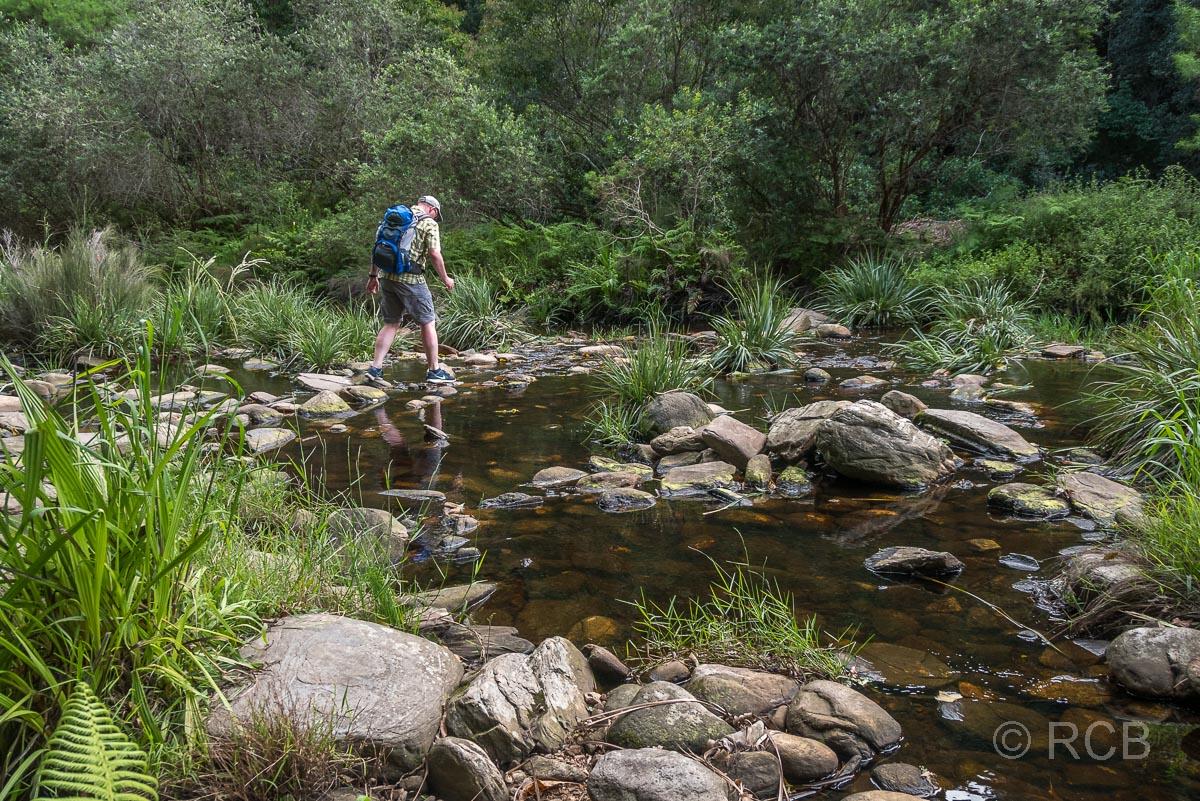 Mann furtet den Touws River auf Steinen auf dem Half Collared King Fisher Trail bei Wilderness