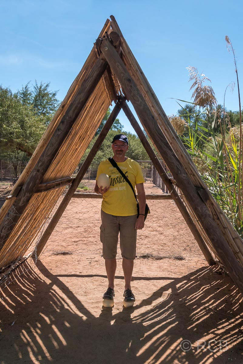 Mann steht auf 2 Straußeneiern, Safari Ostrich Farm, Oudtshoorn