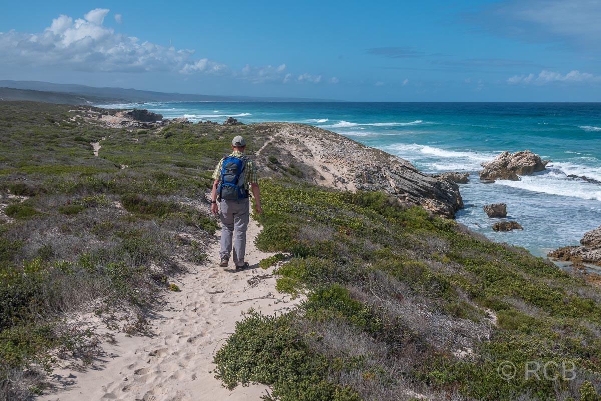 Mann wandert durch Dünen oberhalb einer Felsküste, De Hoop Nature Reserve