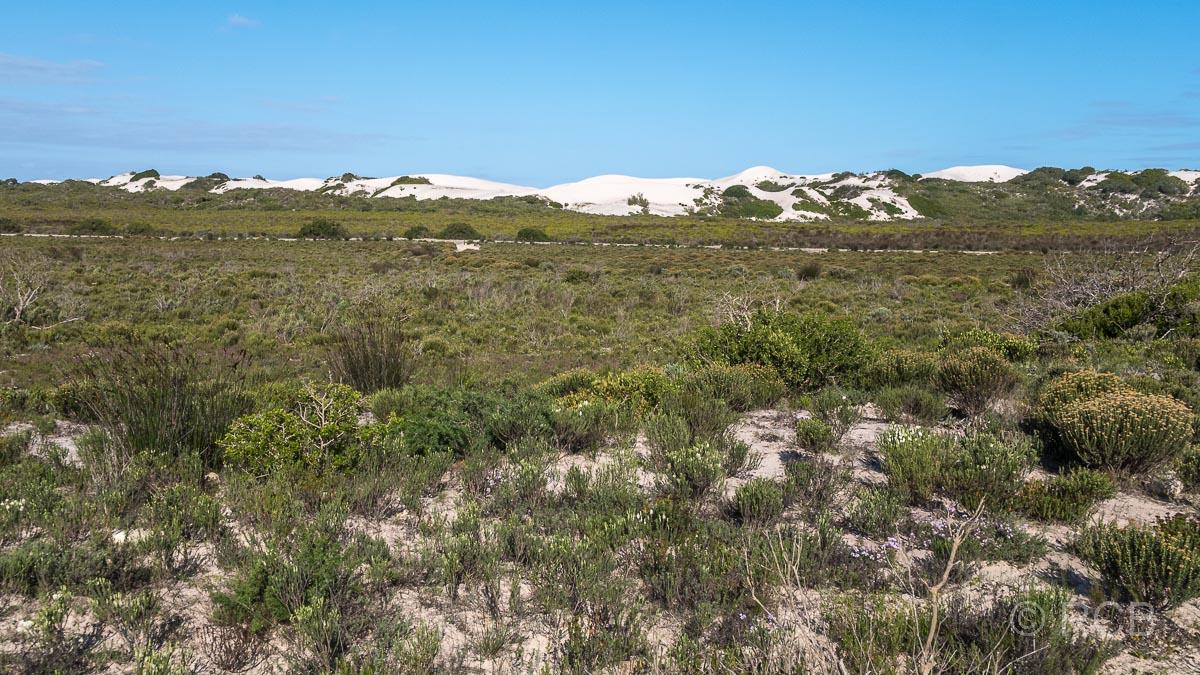 Dünen im De Hoop Nature Reserve