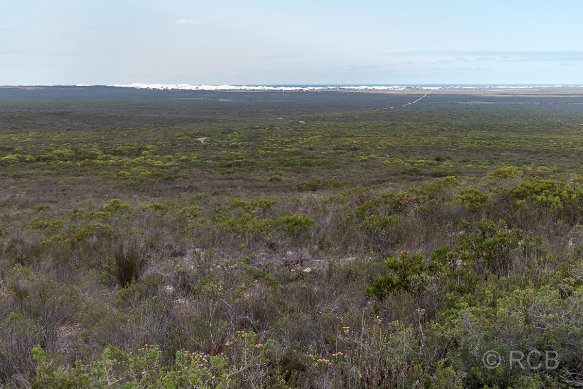 Blick über das De Hoop Nature Reserve, in der Ferne die Dünen