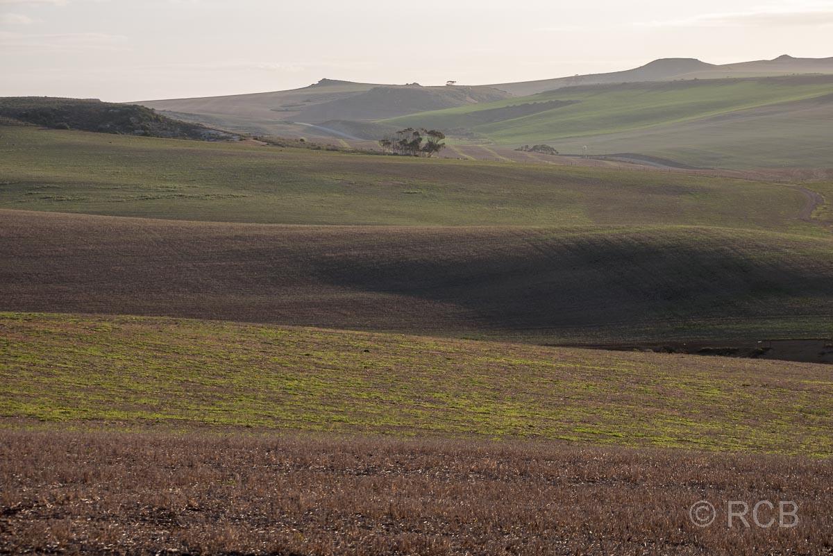 monochrome Felder beim De Hoop Nature Reserve