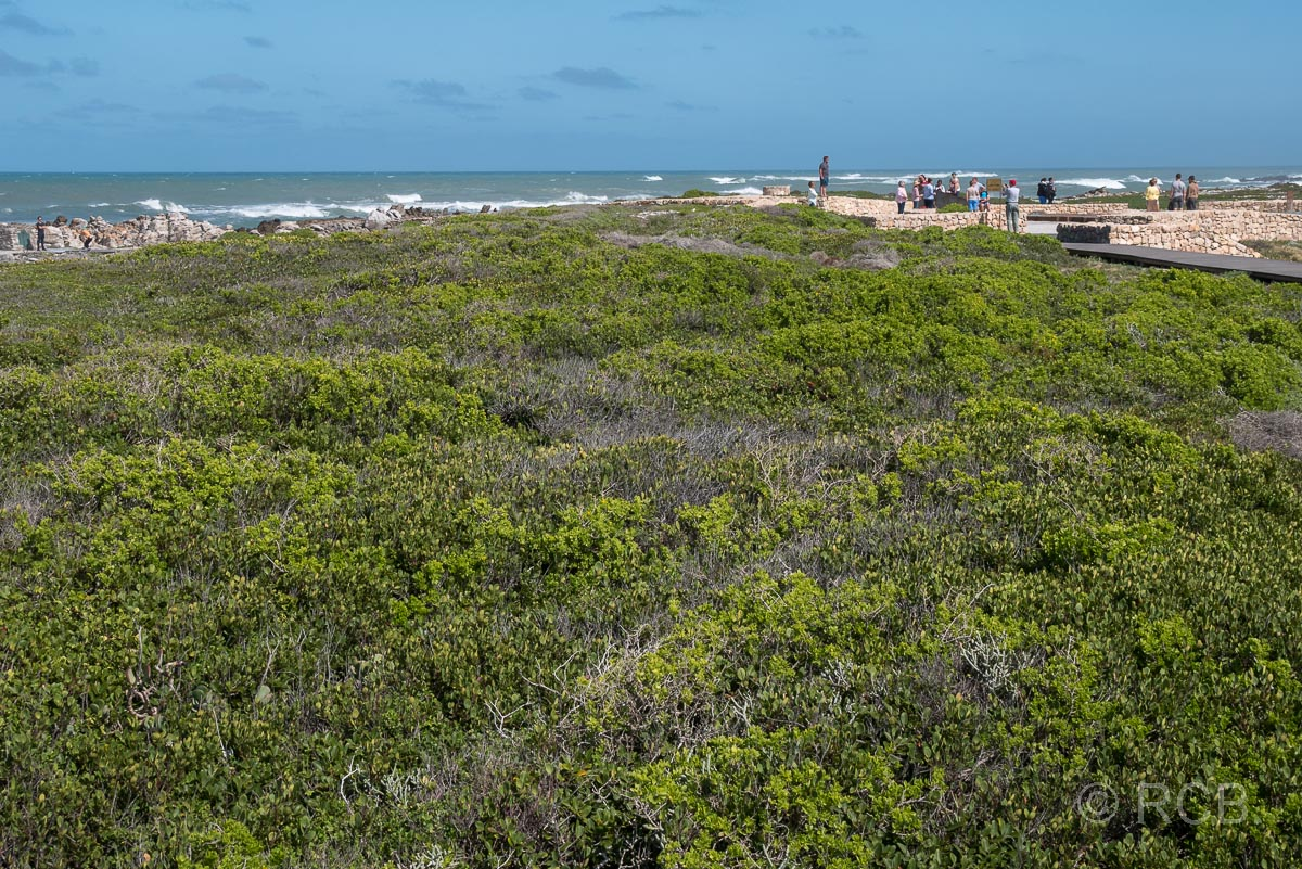 Blick über Buschwerk hin zum Denkmal am Cape Agulhas, dem südlichsten Punkt des afrikanischen Kontinents