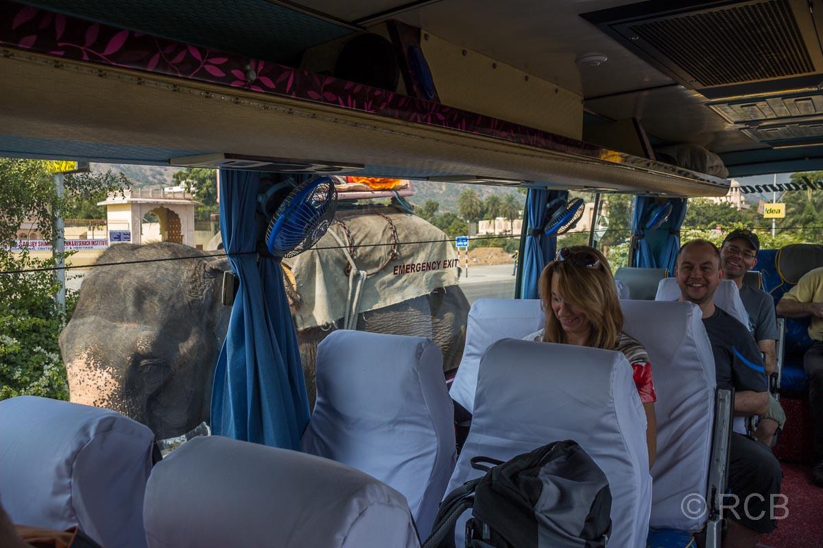 Elefant geht an einem Touristenbus vorbei