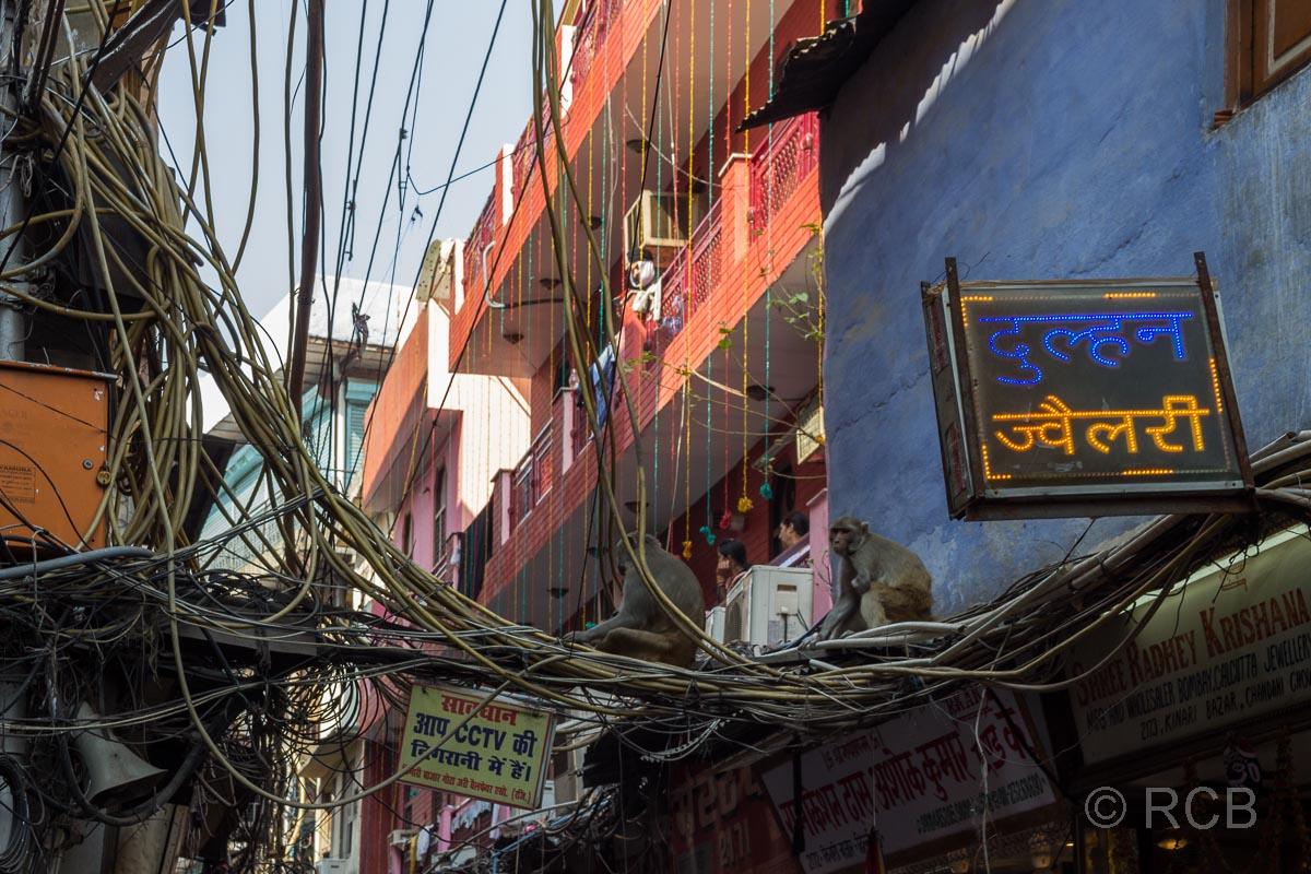 Affen sitzen auf Hunderten Stromkabeln in den Gassen von Old Delhi