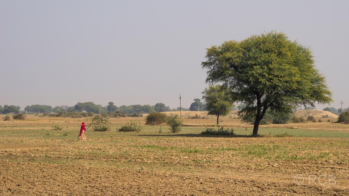Felder auf der Fahrt durch Rajasthan