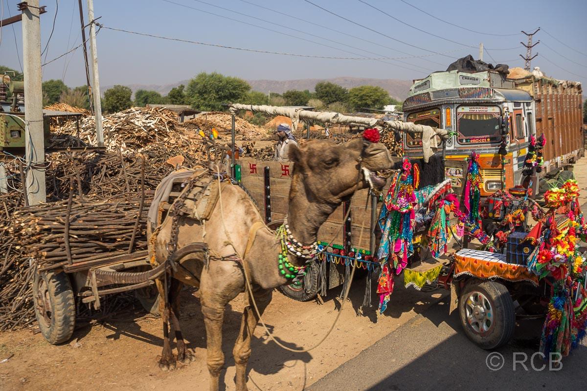 Dromedar und bunt geschmückter Truck auf der Fahrt durch Rajasthan