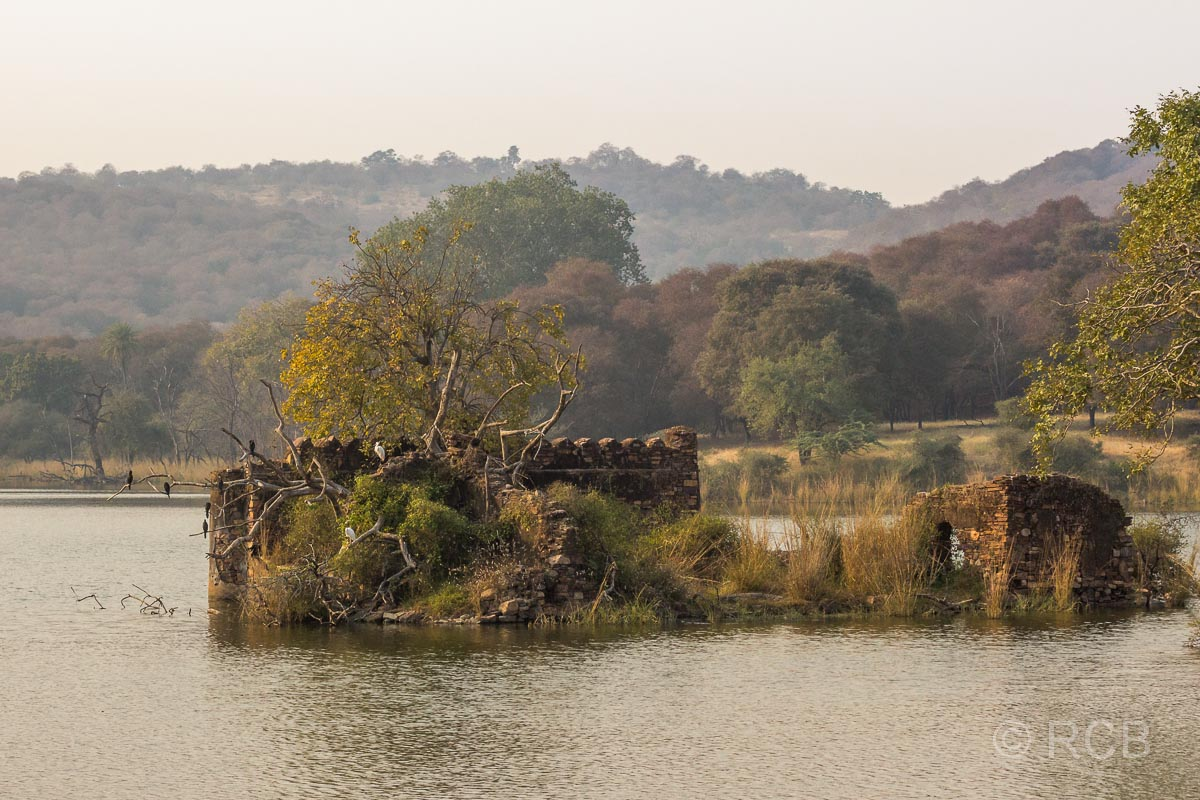 See mit Ruine im Ranthambore National Park