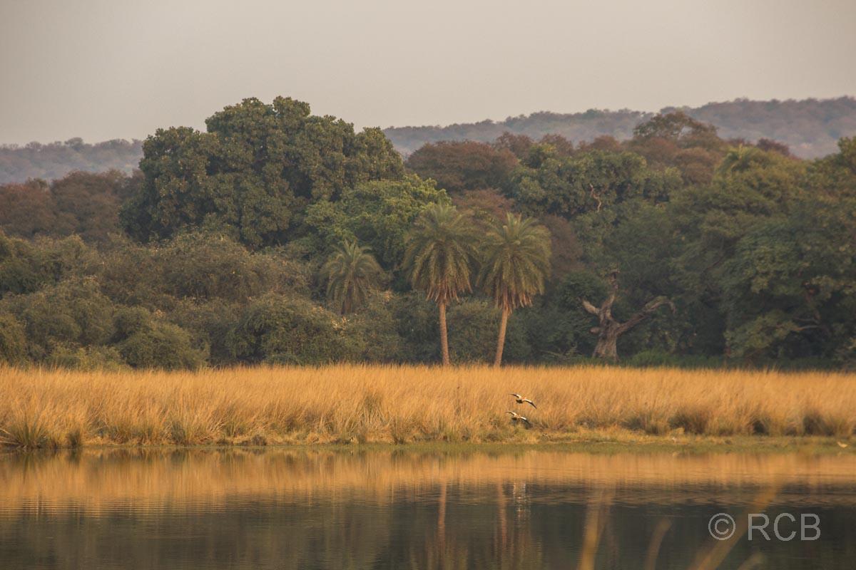 See mit Bäumen, Ranthambore National Park