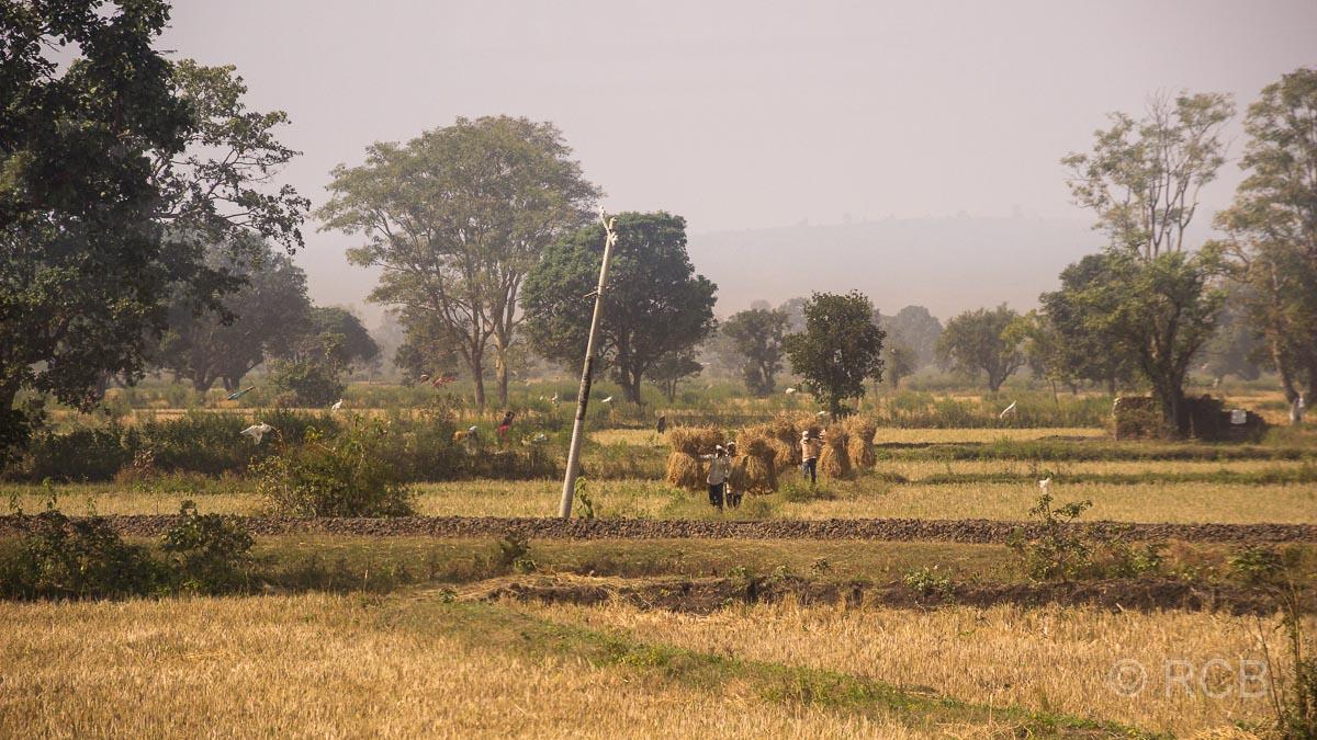 Bauern tragen gebündeltes, geerntetes Heu in Madya Pradesh