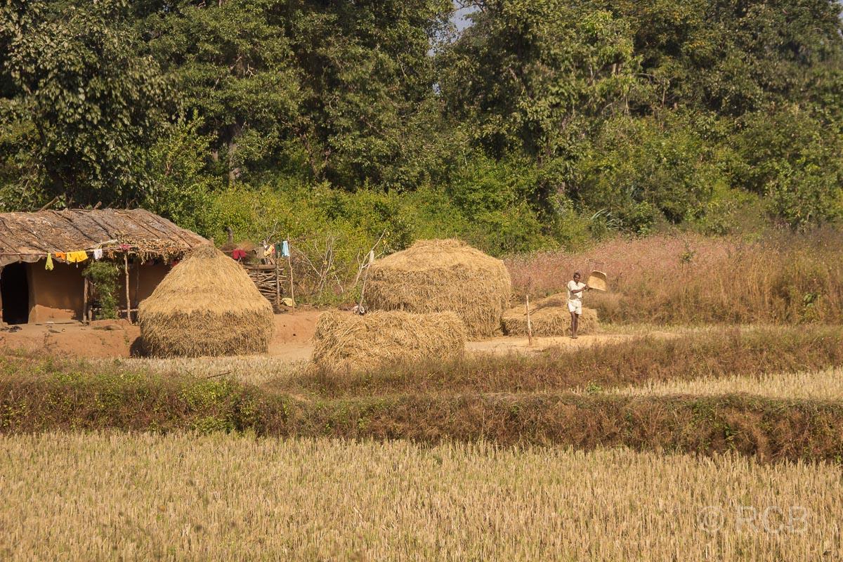 Heuhaufen vor einer Hütte auf der Fahrt durch Madya Pradesh