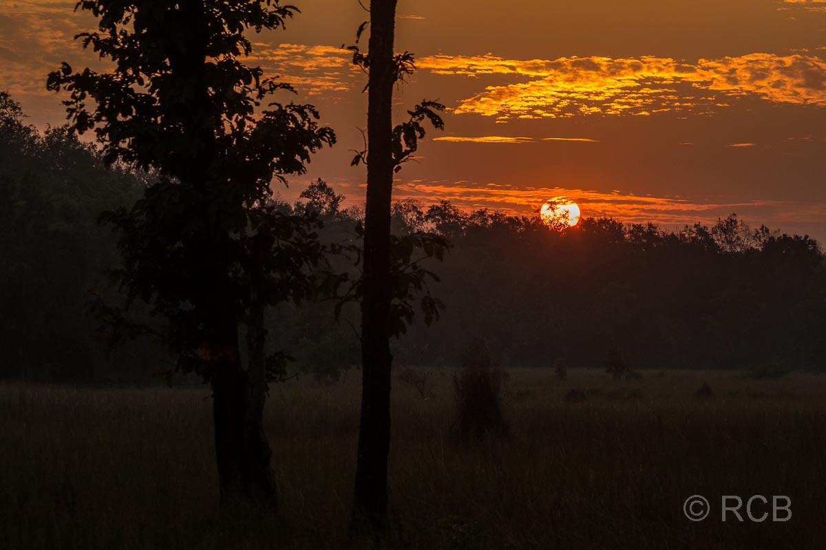 Kanha National Park, Sonnenuntergang