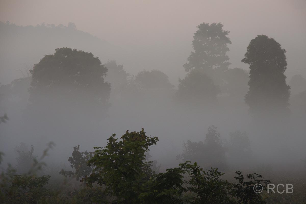 Bäume im Nebelin der Nähe des Kanha National Park