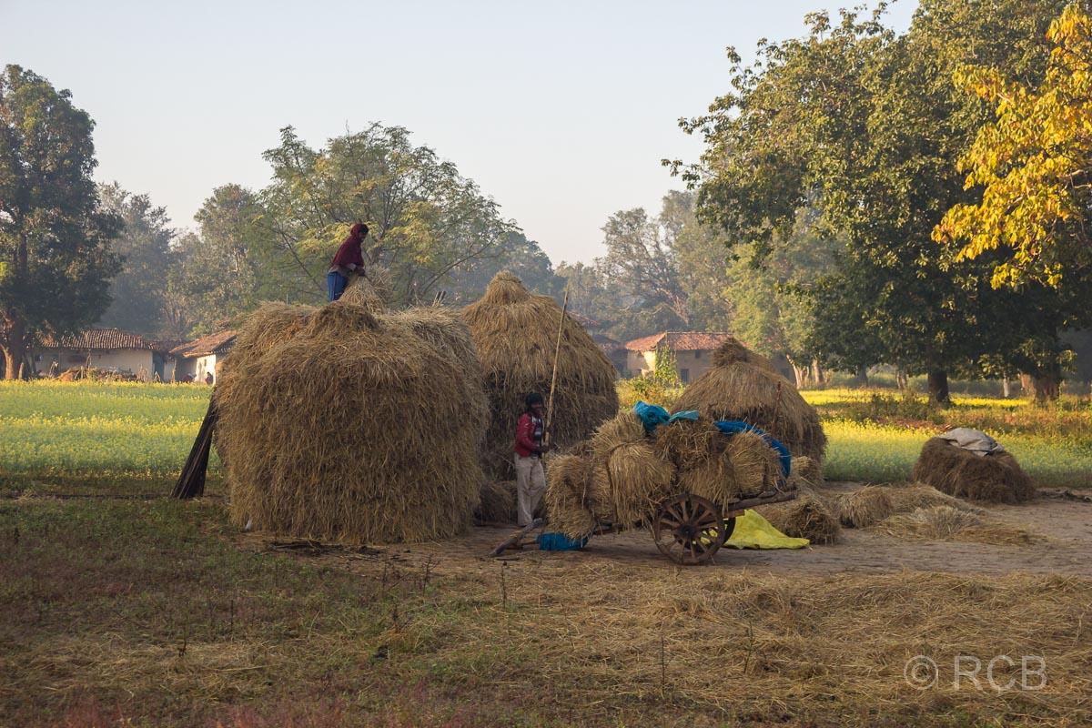 Menschen laden Heu ab in einem Dorf in der Nähe des Kanha National Park