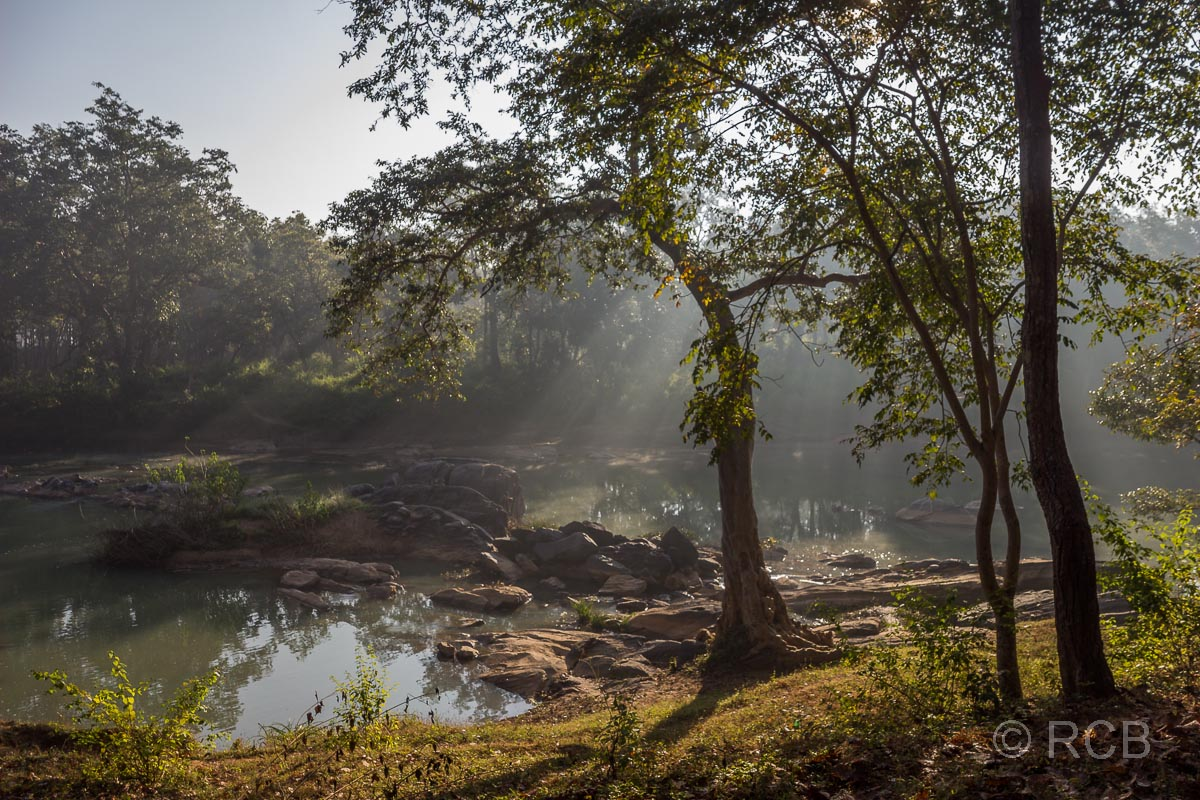 Fluss im Wald im Kanha National Park