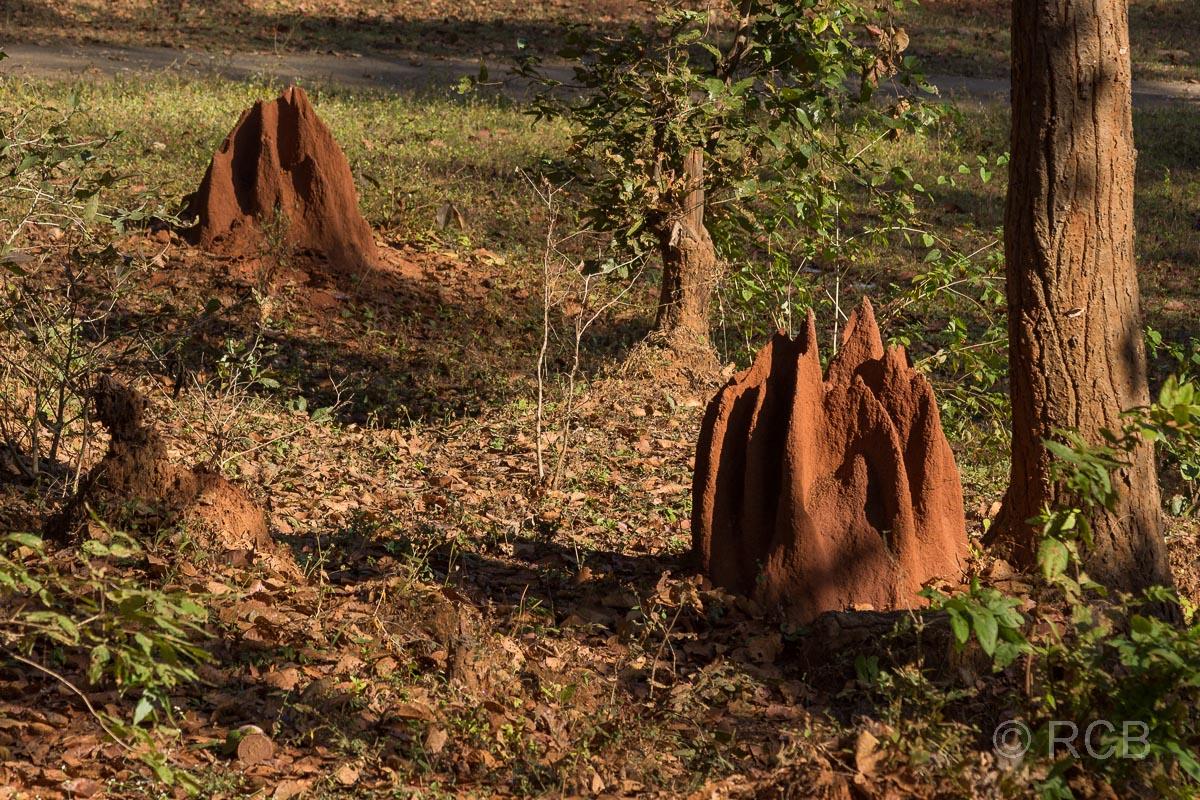 Termitenhügel, Kanha National Park