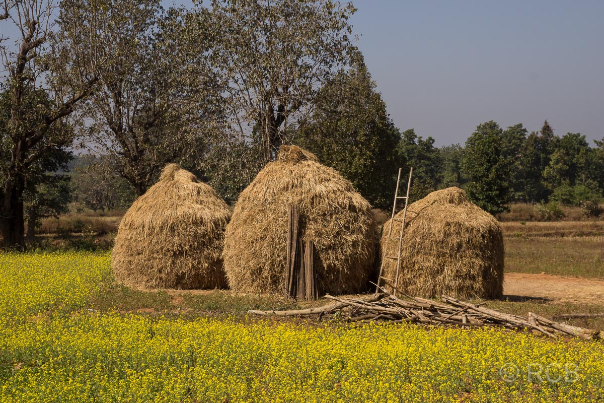 Heuschober in einem Dorf in der Nähe des Kanha National Park