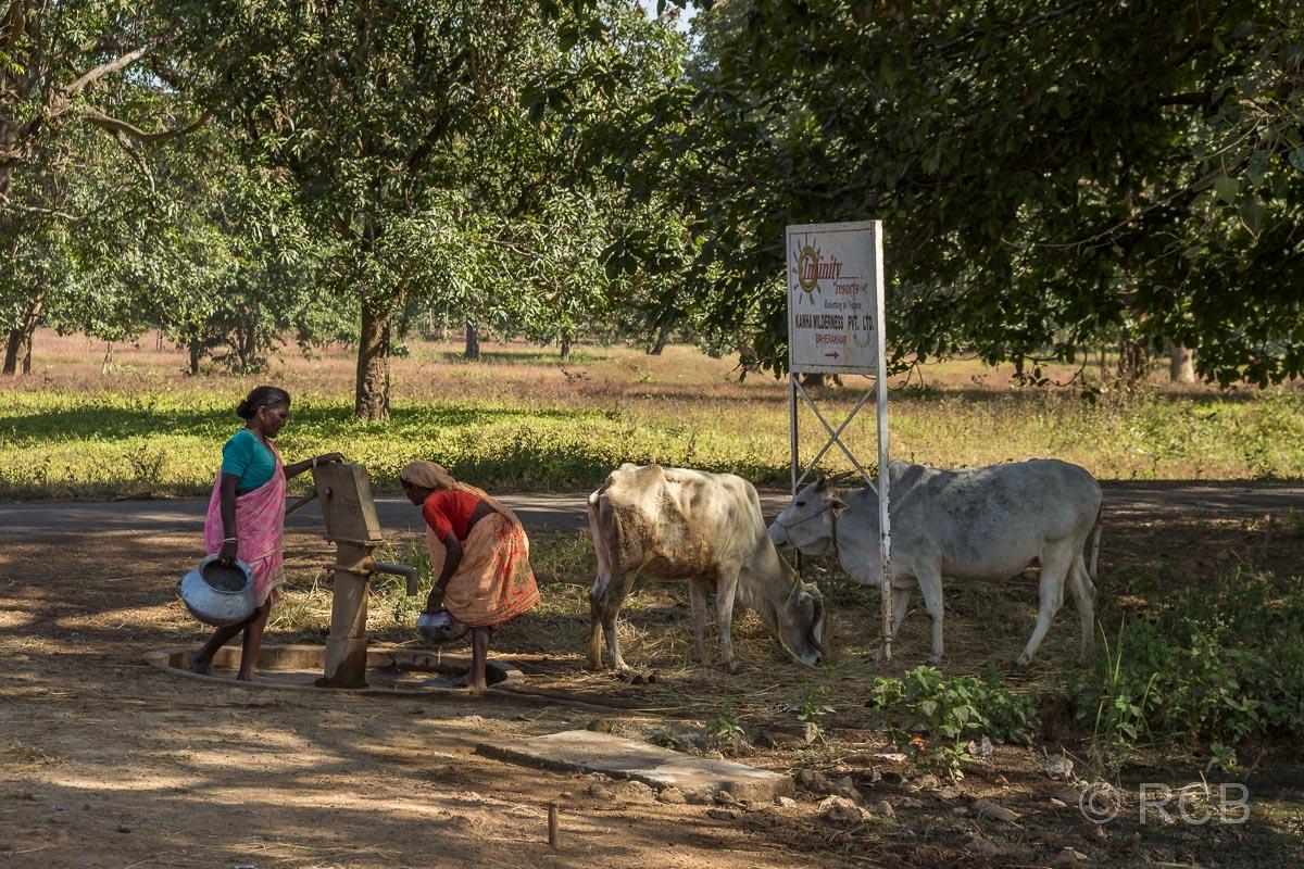 Frauen und Kühe an einem Brunnen in der Nähe des Kanha National Park