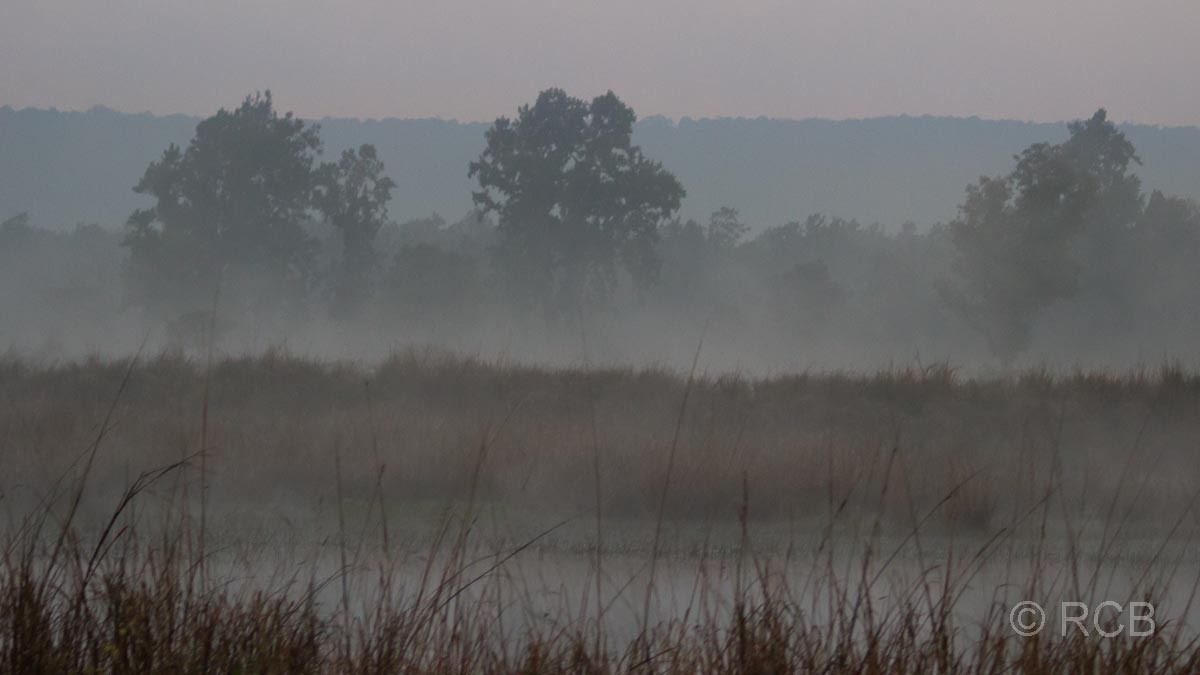 Morgennebel, Kanha National Park