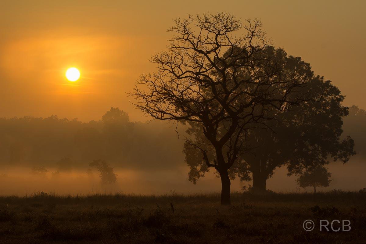 Sonnenaufgang, Kanha National Park