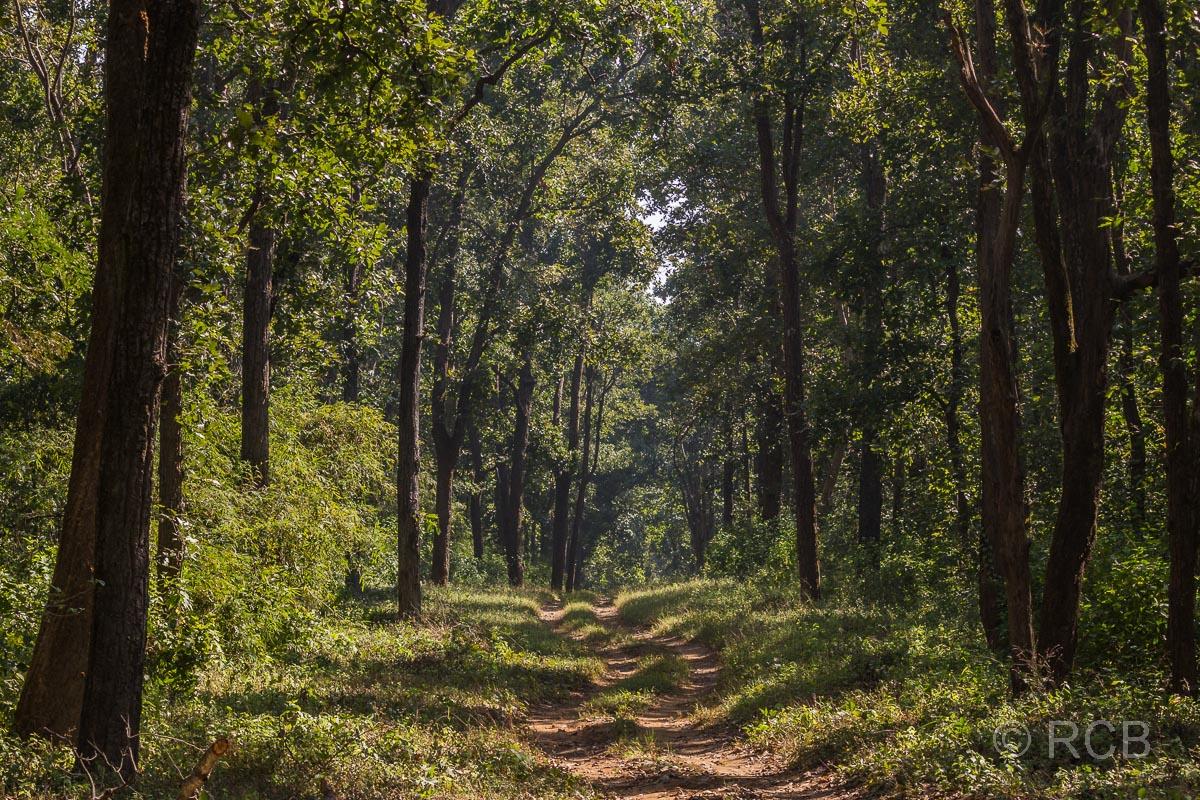 Piste im Wald des Kanha National Park