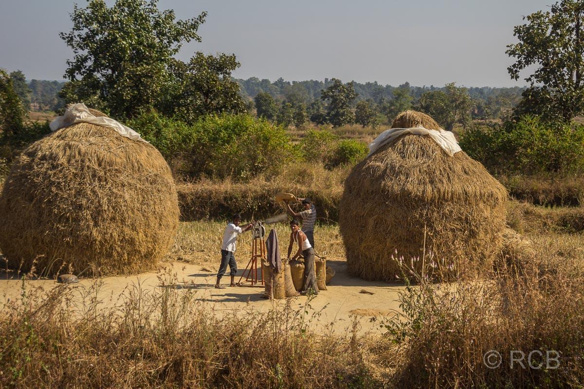Bauern dreschen Heu an der Straße auf der Fahrt durch Madya Pradesh