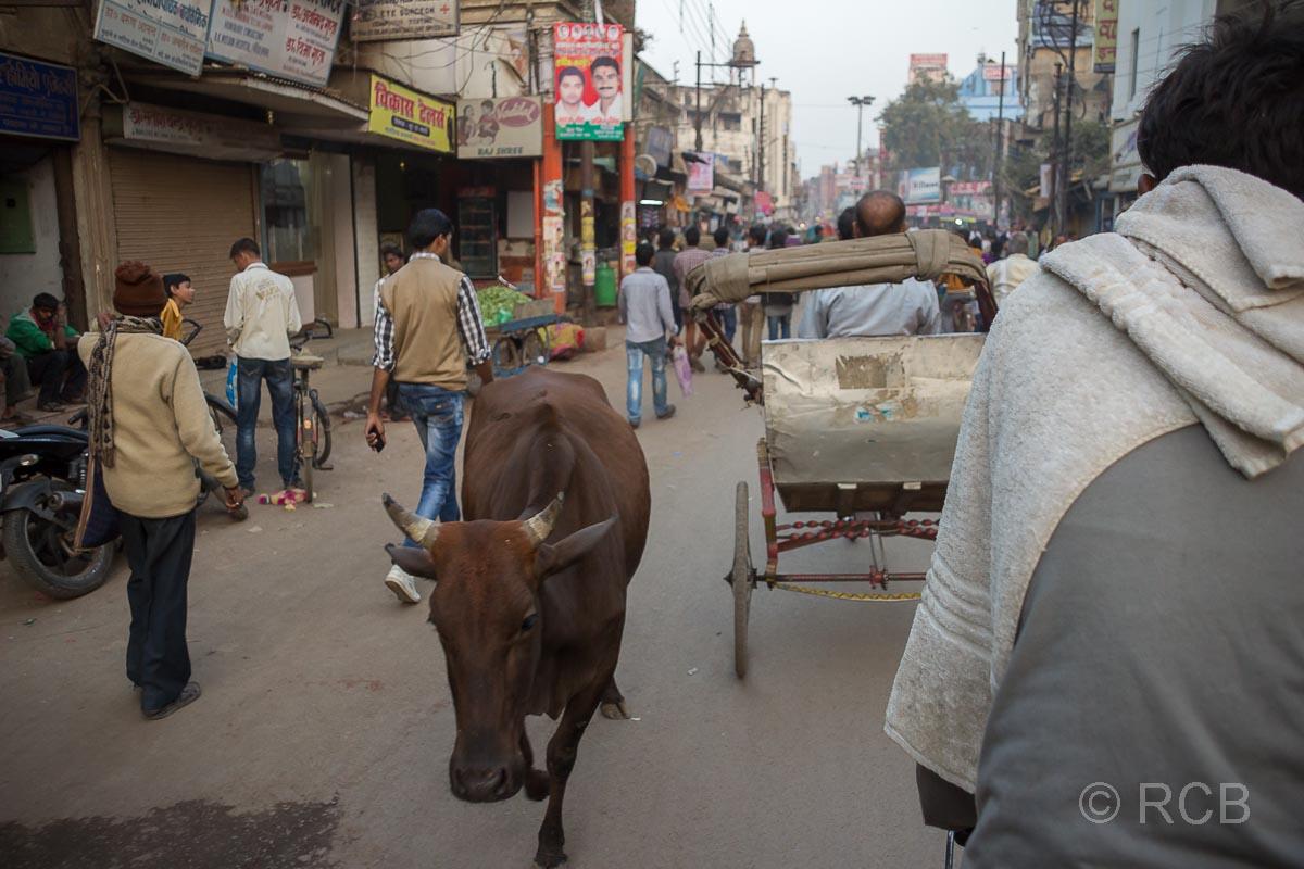 Varanasi, Fahrt mit der Fahrradrikscha, Entgegenkommen einer Kuh