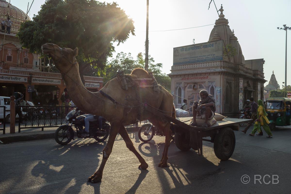 Straßenszene mit Kamelkarren, Jaipur, Altstadt