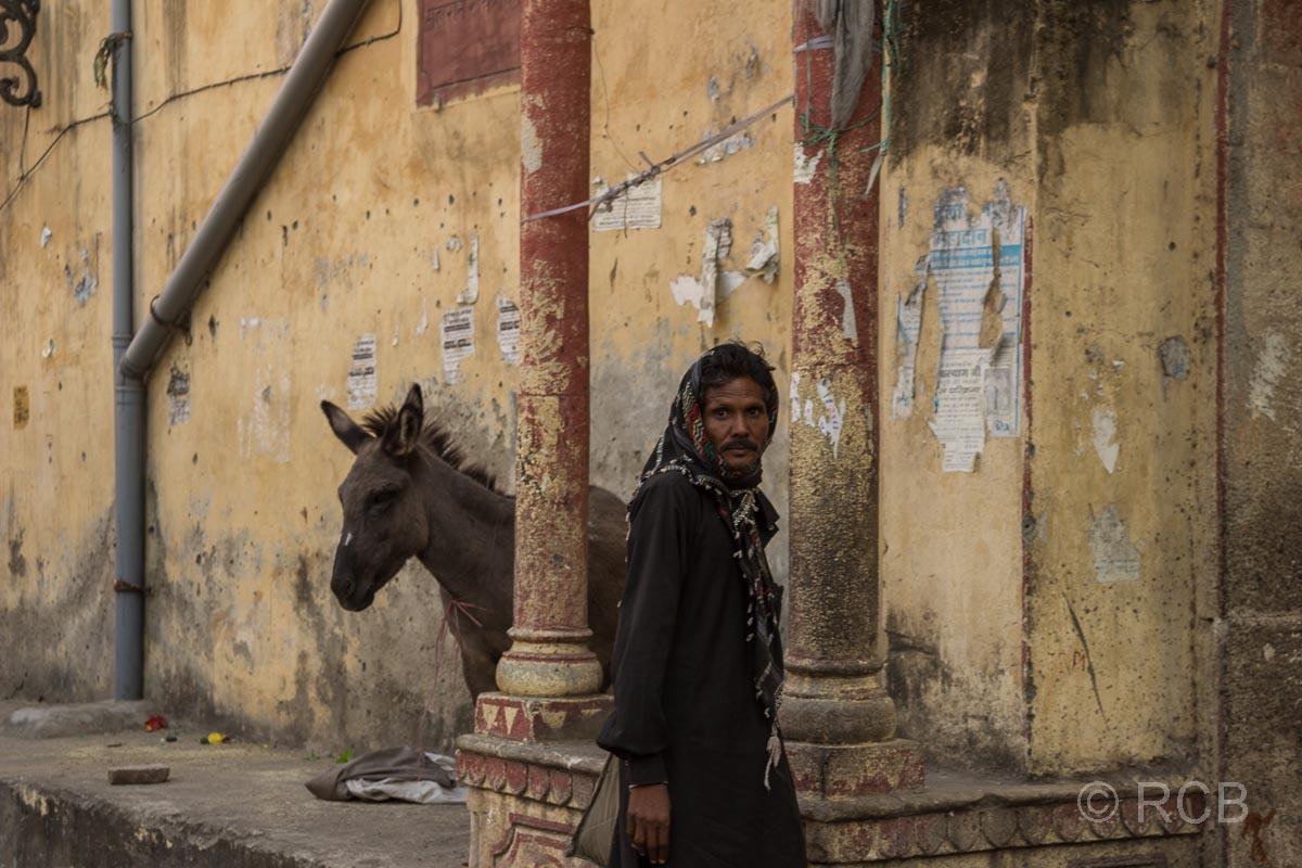 Mann geht an einem Esel vorbei, Sikh-Umzug, Jaipur, Altstadt
