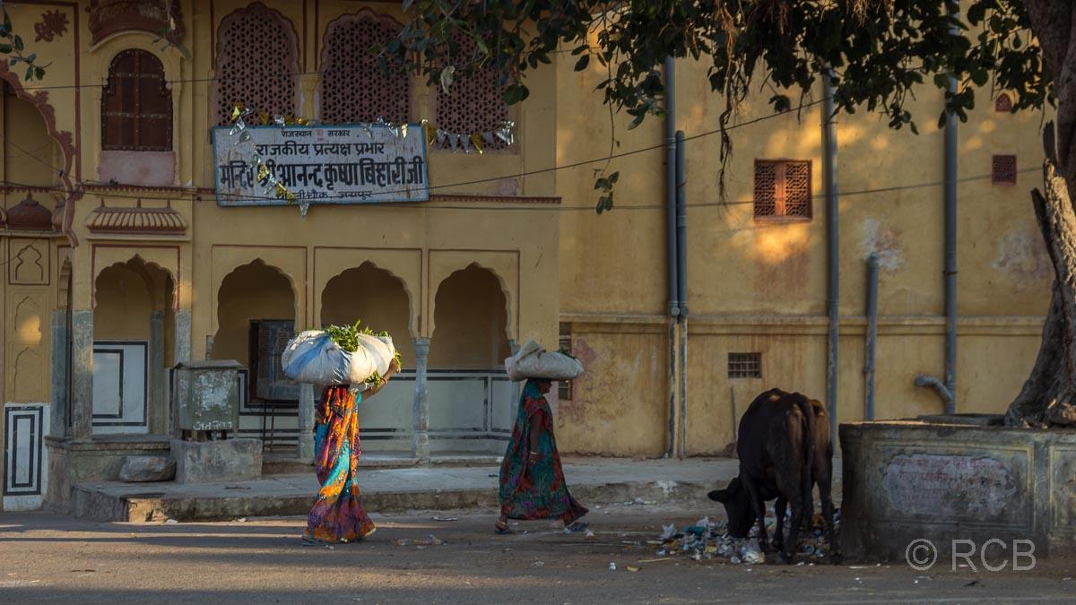 Frauen mit Waren auf dem Kopf gehen an einer Kuh vorbei, Sikh-Umzug, Jaipur, Altstadt