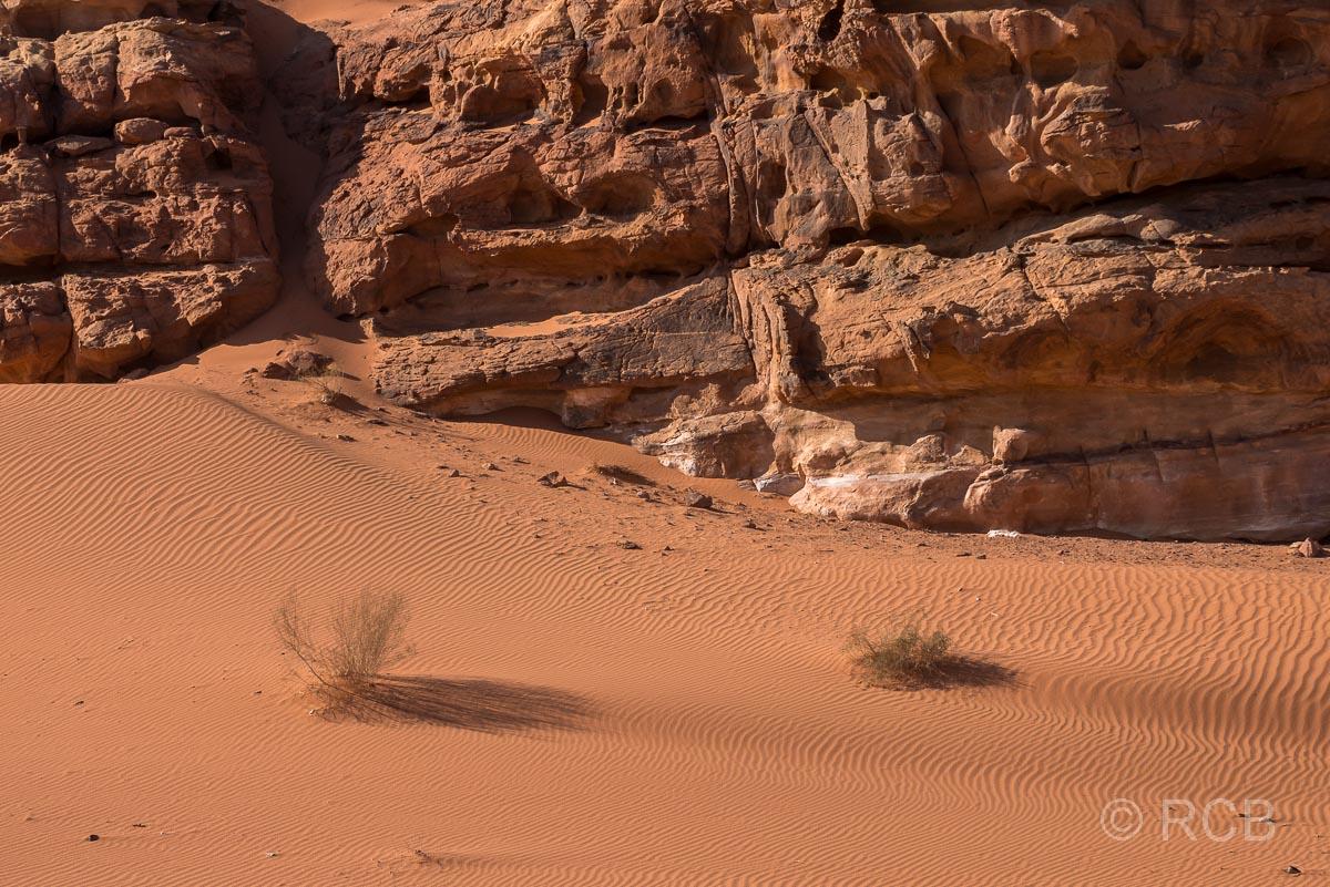 Stilleben im Wadi Rum