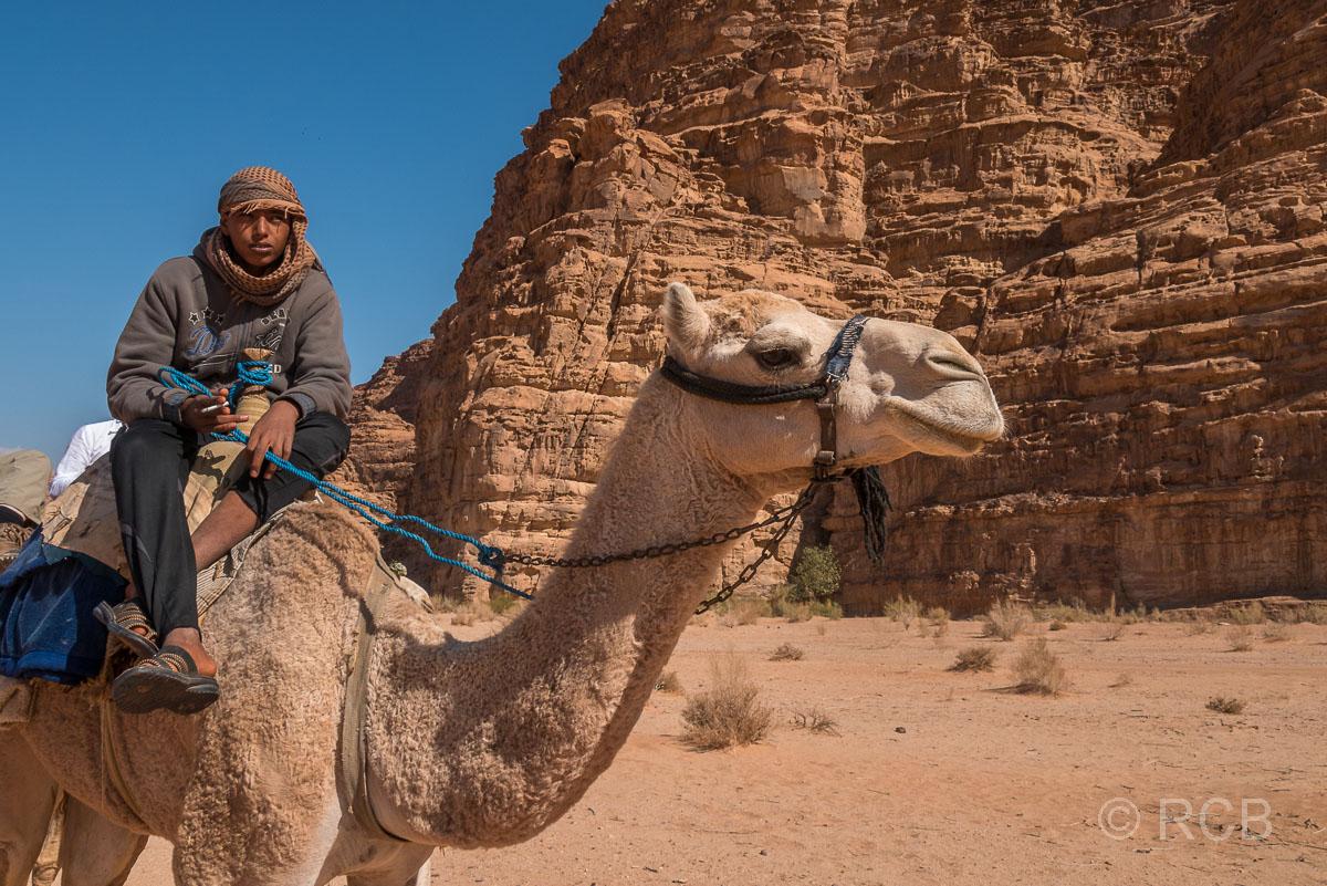 Beduine auf einem Dromedar