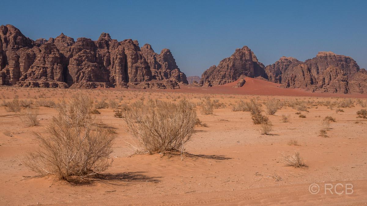 Wüste mit Büschen und Felsen im Wadi Rum