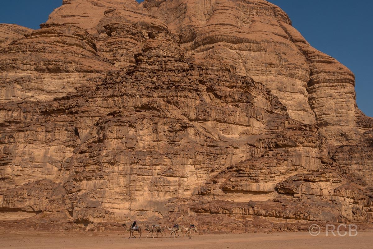 Beduine mit Dromedaren zieht im Wadi Rum an einem Felsklotz vorbei