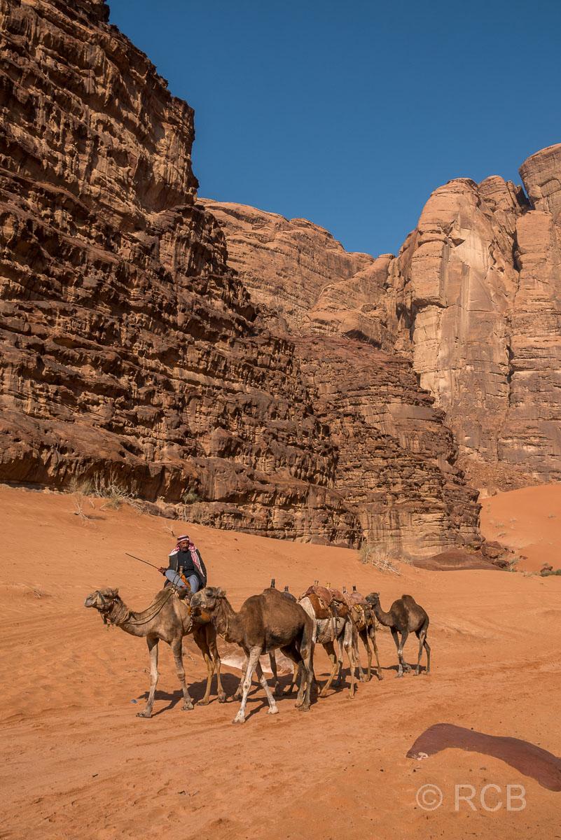 Beduine mit Dromedaren im Wadi Rum