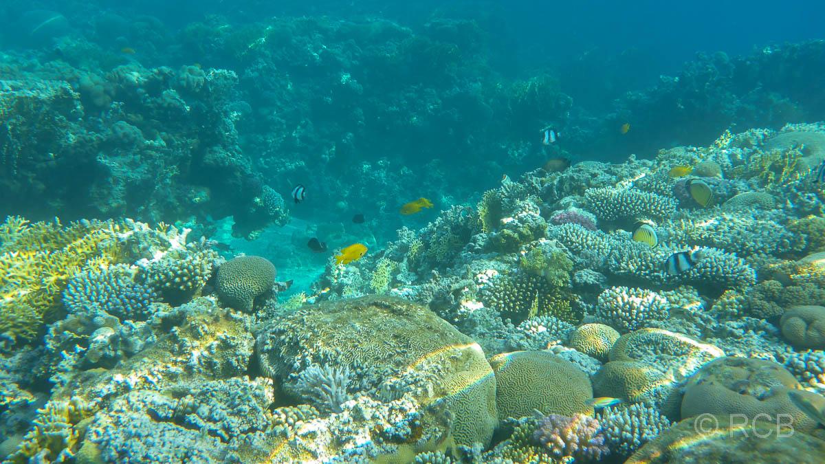 Riff im Roten Meer