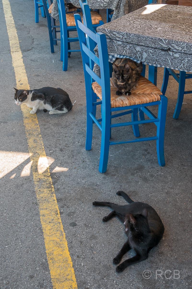 Chania, 3 Katzen ruhen sich vor einem Lokal aus