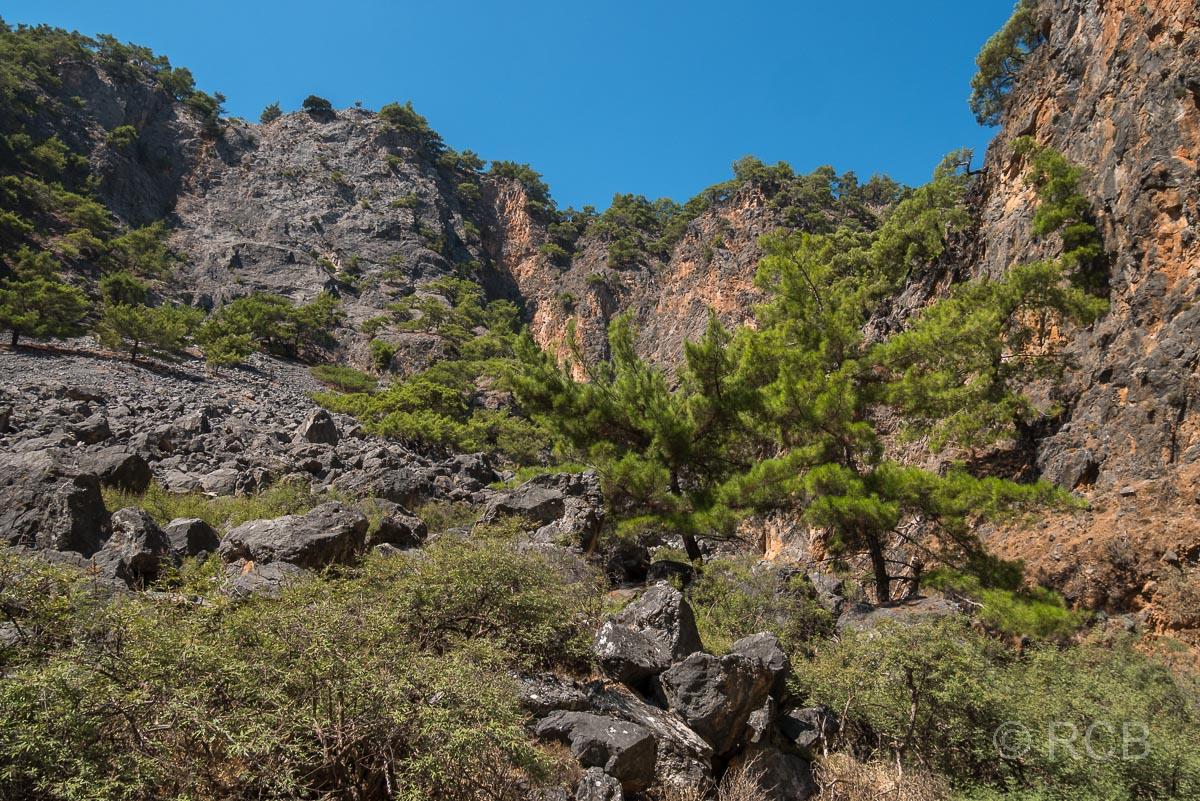 grüne Kiefern und Sträucher in der Aradhena-Schlucht