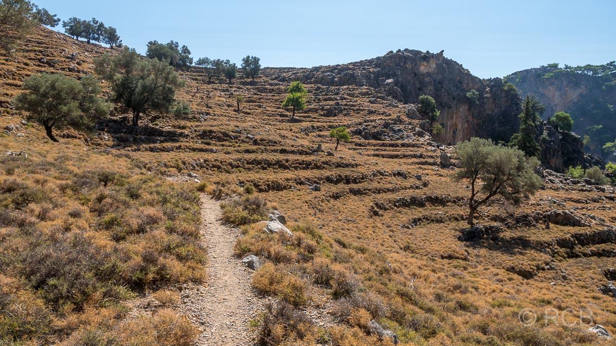 verfallene Oliventerrassen oberhalb der Aradhena-Schlucht