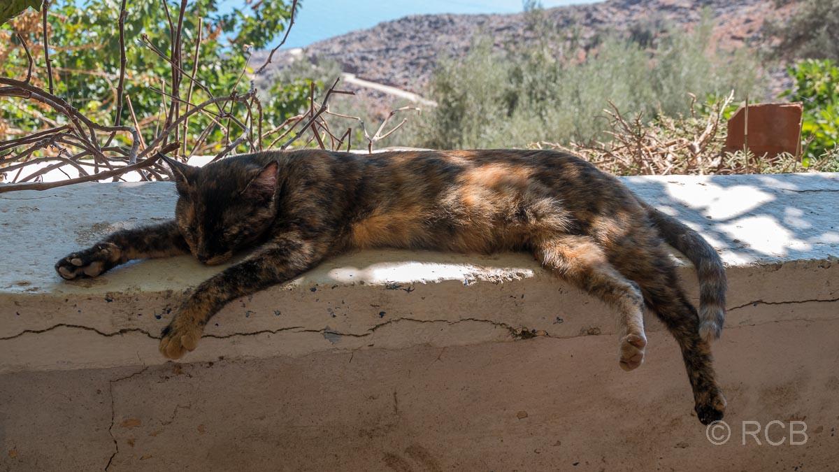 Katze döst zur Mittagspause in Livaniania