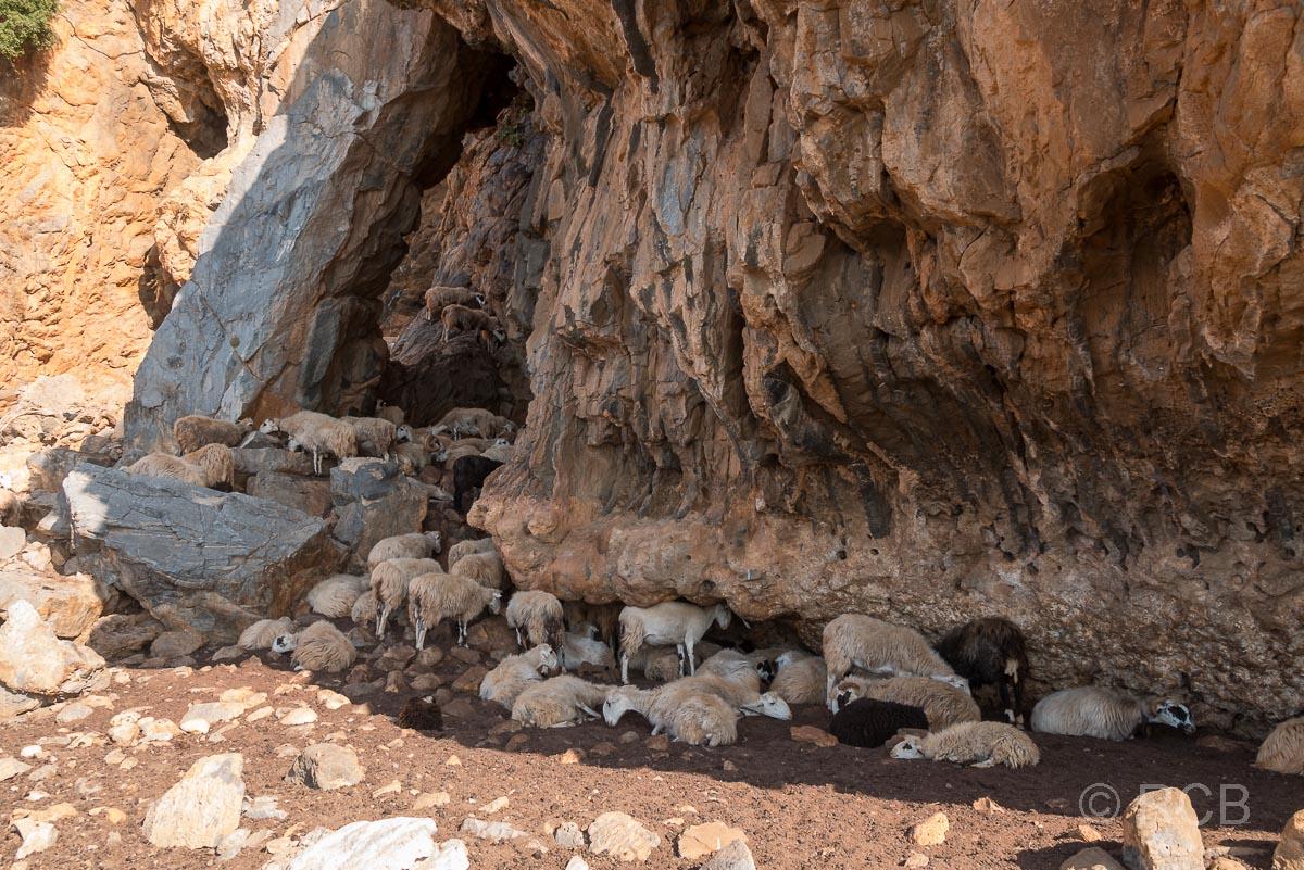 Ziegen ruhen sich aus im Schatten eines Felsen