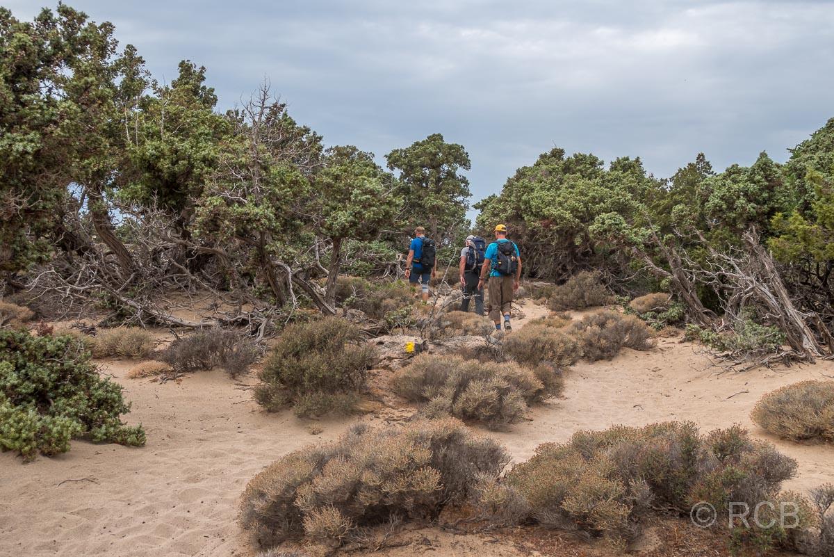 Wanderer gehen durch Wacholderbüsche am Kedrodasos-Strand