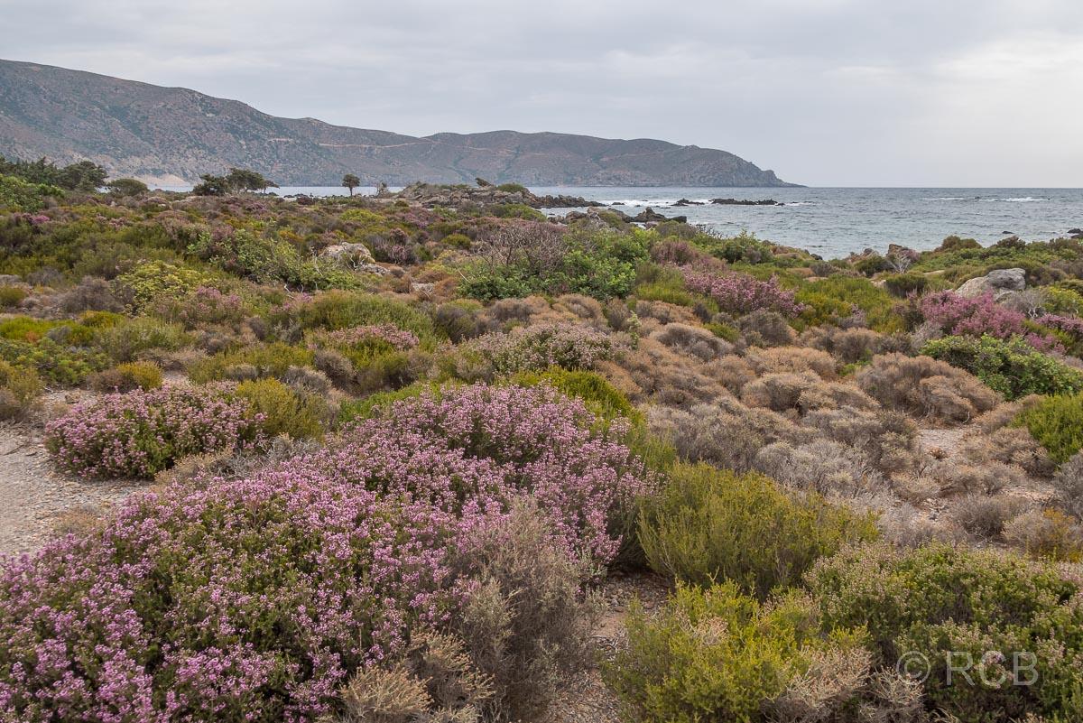 Heidelandschaft am Kedrodasos-Strand