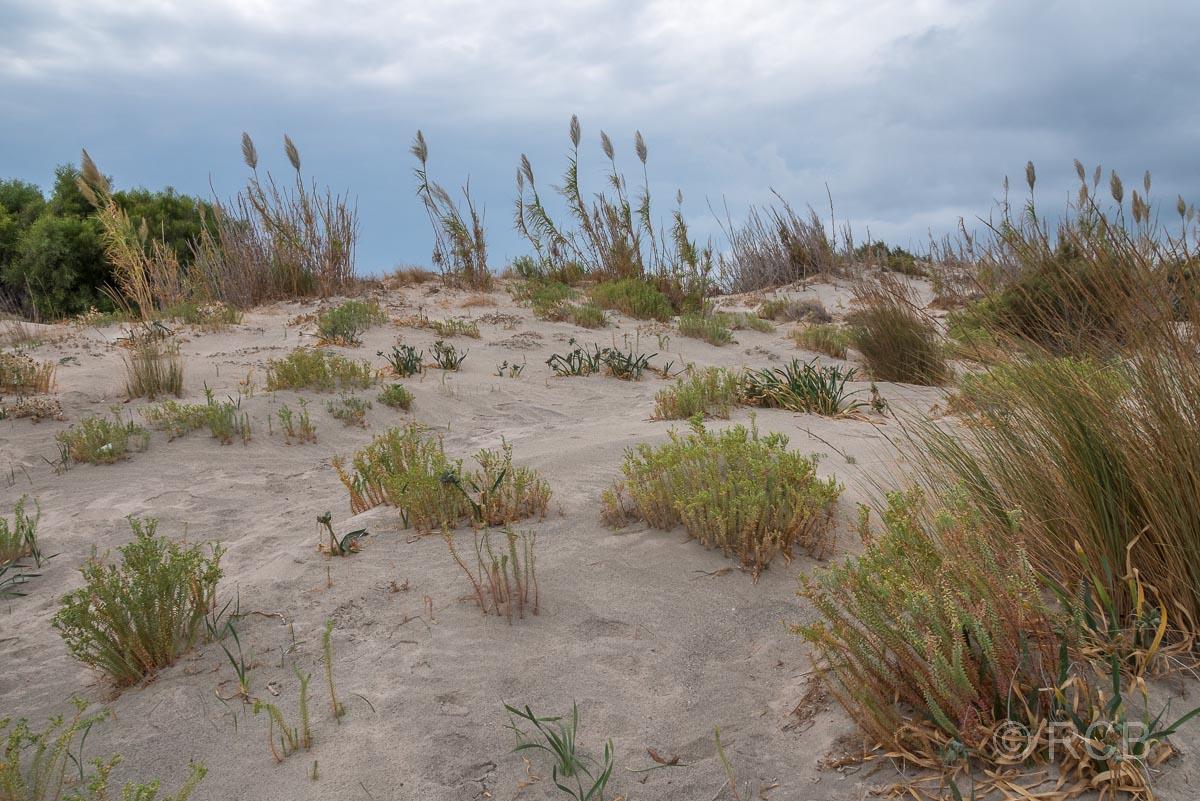 bewachsene Düne am Elafonisi-Strand