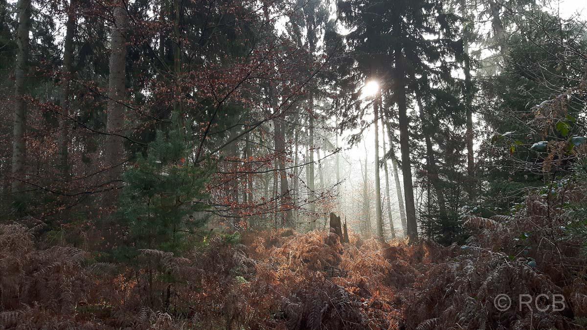 Rund um Schloss Lembeck