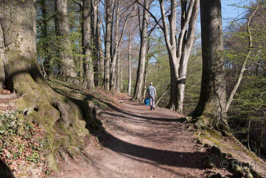 Waldweg am Neanderlandsteig bei Wülfrath