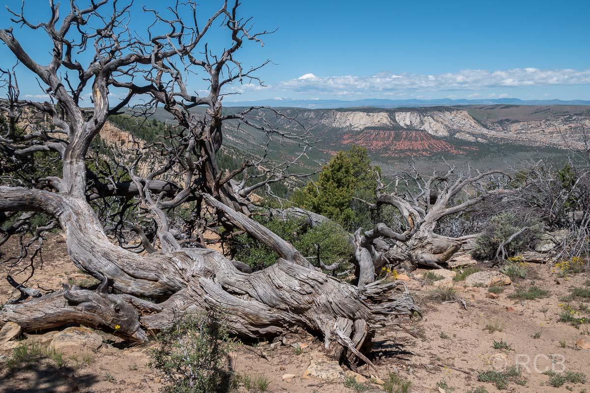 Canyon Overlook, im Dinosaur NM